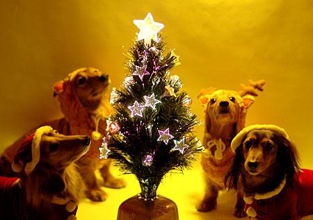 メリークリスマス2007