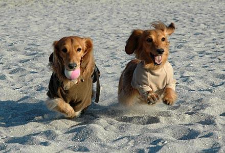 浜辺でボール遊び1
