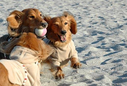 浜辺でボール遊び2